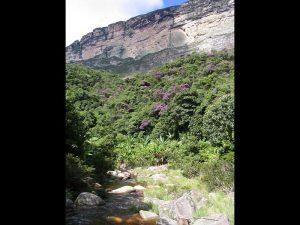 Trilha Cachoeira da Purificação